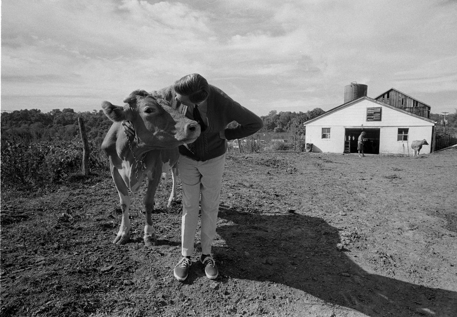 Fred works on the set for a Mister Rogers episode about cows, which included filming in a milking barn in western Pennsylvania.