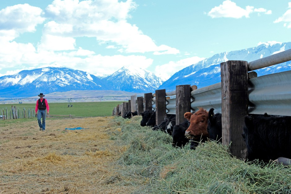Weekend Protests Analysis | Ranchers And Tariffs | Lamprey