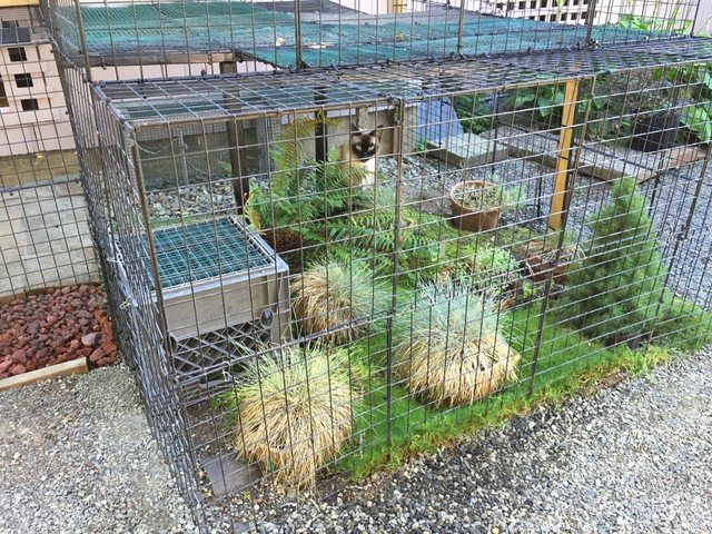 Catios are enclosed outdoor patios that keep cats safe while also protecting backyard wildlife.