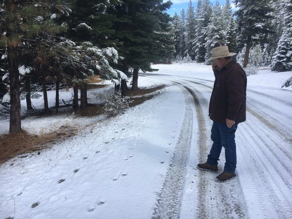 Todd Nash, rancher and Wallowa County commissioner, examines wolf tracks on a road in the Wallowa-Whitman National Forest, which leads up to a pasture where his cattle graze.
