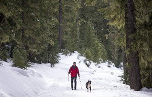 Jonathan Jost skis with his dog Tessa near the Gold Lake Sno Park west of Willamette Pass east of Oakridge. Snowpack in the area is about half of normal for this time of year.