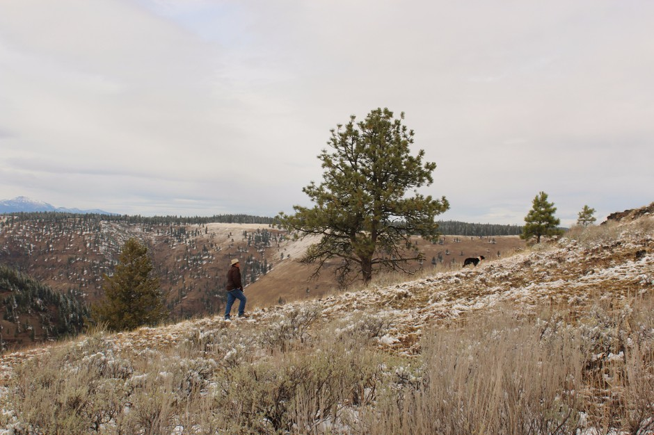 Wallowa County rancher Todd Nash and a cattle dog hike up a slope in Eastern Oregon. Many ranchers say the presences of wolves makes it more difficult to use herding dogs. Some research indicates guarding dogs coulddeter wolves from attacking livestock.