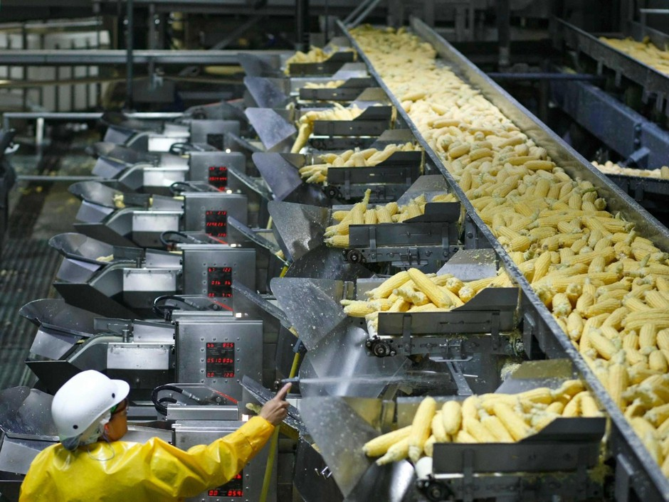 Corn goes from ear to frozen product at the NORPAC Foods facility. Marion County has the highest agricultural production value of any county in Oregon.