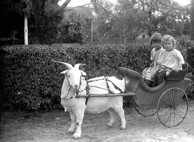 Children posing in goat-drawn carts were popular photo subjects in the early 1900s. Amos Voorhies, owner and publisher of the Rogue River Courier weekly newspaper in Grants Pass, bicycled around rural Southern Oregon with a bulky glass-plate camera, capturing children at play, families posed in front of their houses, men and women working at everyday tasks and other facets of frontier life that otherwise would have been lost to history.