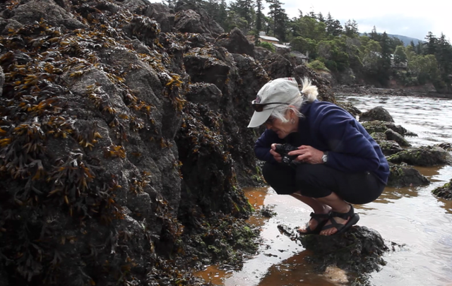 Marine epidemiologist Drew Harvell inspects sick sea stars in Washington's San Juan Islands.