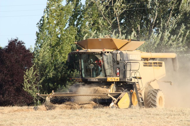 A combine harvesting grass seed in Oregon.