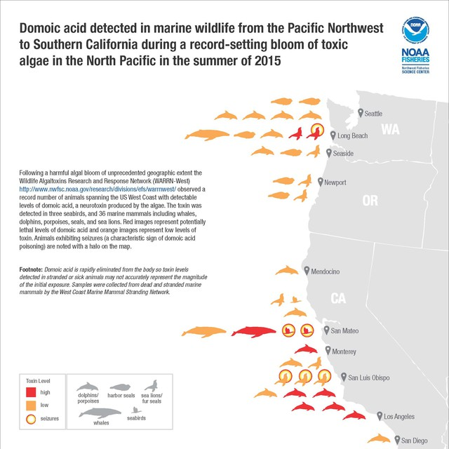 Domoic acid in marine wildlife on West Coast during a record-setting bloom of toxicalgae in 2015.