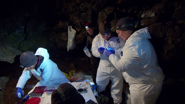 Researchers in eastern Oregon capture bats in nets to look for signs of white nose syndrome and document the health and size of the region's bat populations.