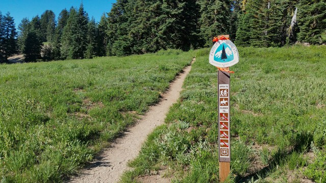 The last Franklin's bumblebee ever seen was just south of this spot near the Pacific Crest Trail on Mount Ashland.