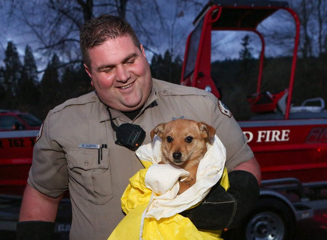 Blondie the puppy was rescued by Springfield Police Animal Control officer Brian Austin and a crew from the Springfield Fire Water Rescue Friday evening. The small dog was stranded on an island in the McKenzie River in Springfield.