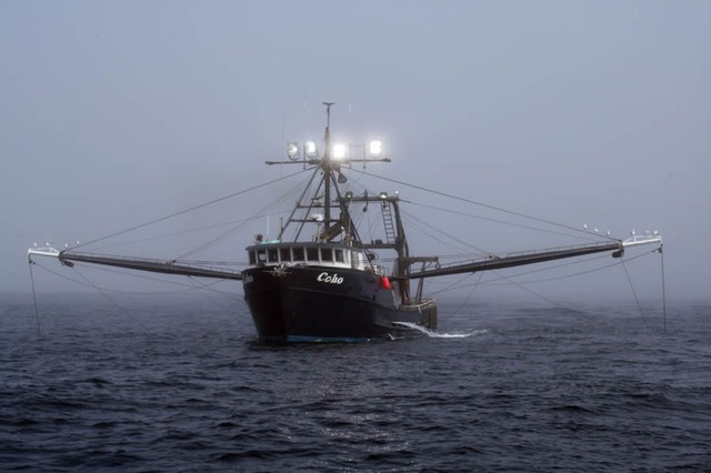 Groundfish trawlers dragged along the seafloor to catch groundfish species such as rockfish, black cod and Dover sole.
