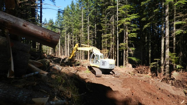 A crew builds a new road on a Weyerhaeuser Tree Farm near Molalla. States set construction, maintenance, and placement standards for new logging roads, to control water pollution.