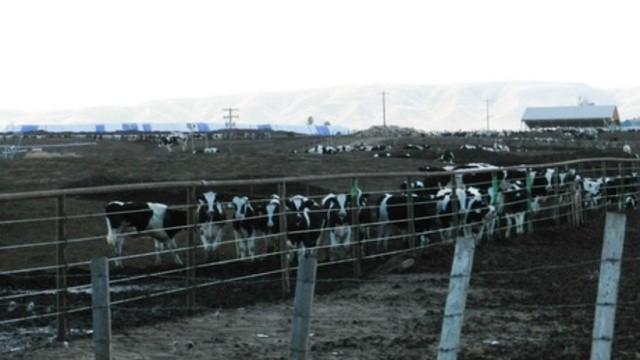 A dairy in the Yakima Valley. After a more than a year of testing, dairies in Washington's Lower Yakima Valley are trying to reduce pollution from manure.