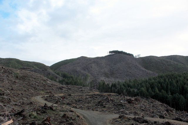 The forest surrounding Jetty Creek, the water supply for the town of Rockaway Beach on Oregon's north coast, has been logged heavily. Some residents there say the timber harvests have impacted their water quality, but the forest owners, industry groups and the state's Department of Forestry disagree.