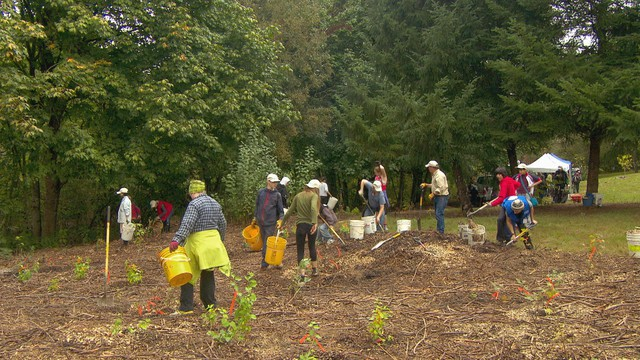 Volunteers planted 1100 shrubs and trees in one morning at Murrayhill Park in Beaverton.