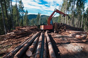 A contractor sorts logs on Oregon Board of Forestry land in southern Oregon.
