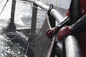 An aquaculture employee standing over a net pen where farmed fish are being raised.