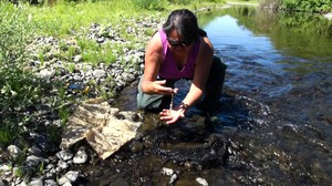 Eva Carl is researching how lamprey bodies might act as fertilizer for streams. She's been monitoring the stream flow and taking water quality samples every three days.