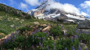 An alpine meadow high above tree line in the Mount Hood Wilderness.