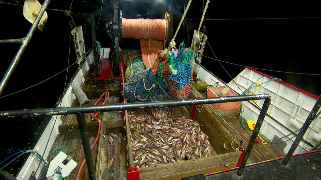 West Coast Rockfish Rebound Faster Than Expected   News | OPB
