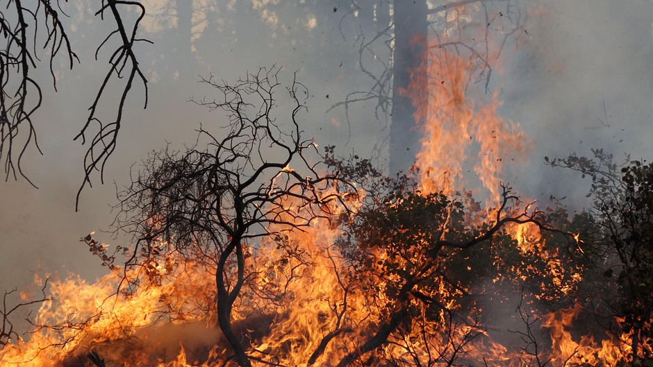 Manzanita and other low brush are targets of some prescribed burns in central Oregon.