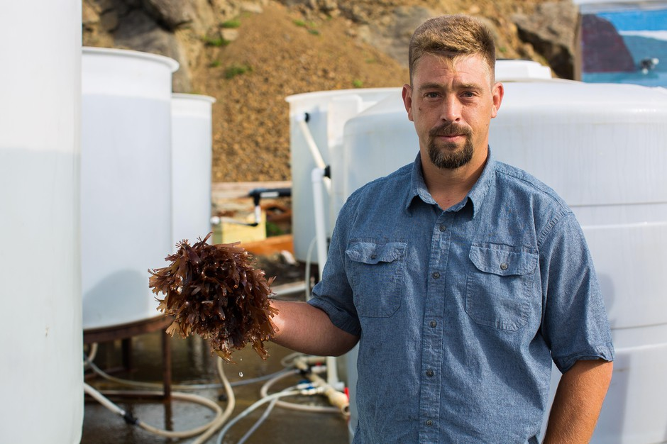 Dulse harvester James Weimar holds a near-mature dulse frond next to his sea water tanks on the Port of Port Orford dock, June 13, 2018.