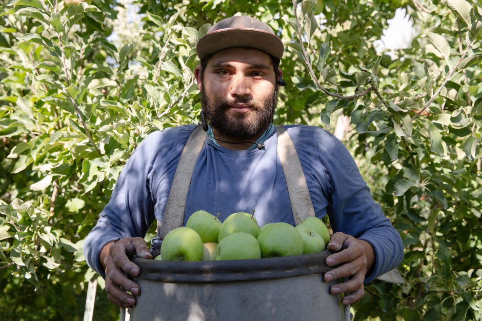 Victor Covarrubias holds a basket of Granny Smith apples at Avalon Orchards in Sundale, Wash., Monday, Oct. 7, 2019.
