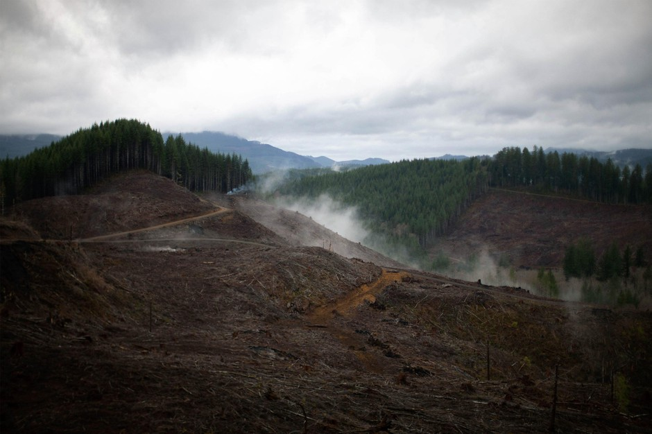 Smoke rises from clear-cut land and mixes with fog at an industrial forest in Oregon's Coast Range.