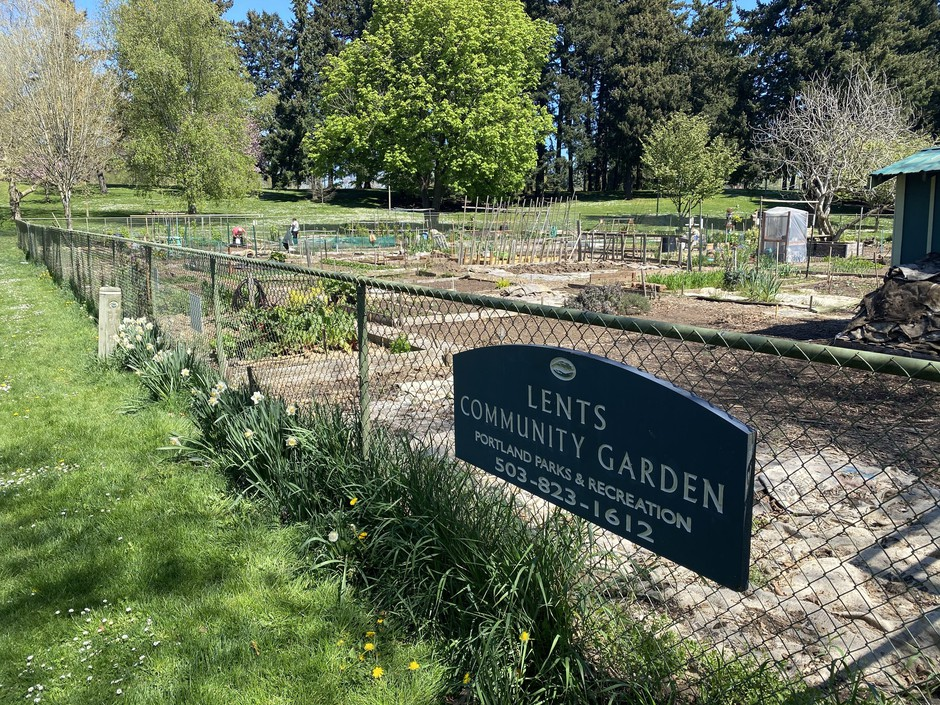 Just one of the many new places people are social distancing: community gardens. Portland Parks & Recreation has kept community gardens open while adhering to public health guidelines.