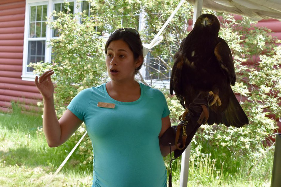 Jessie Walters holds up a golden eagle during an educational session at the Teton Raptor Center in Wilson, Wyo. Golden eagles have been dying of lead poisoning due to hunters' bullets and conservationists disagree about how to address the problem.