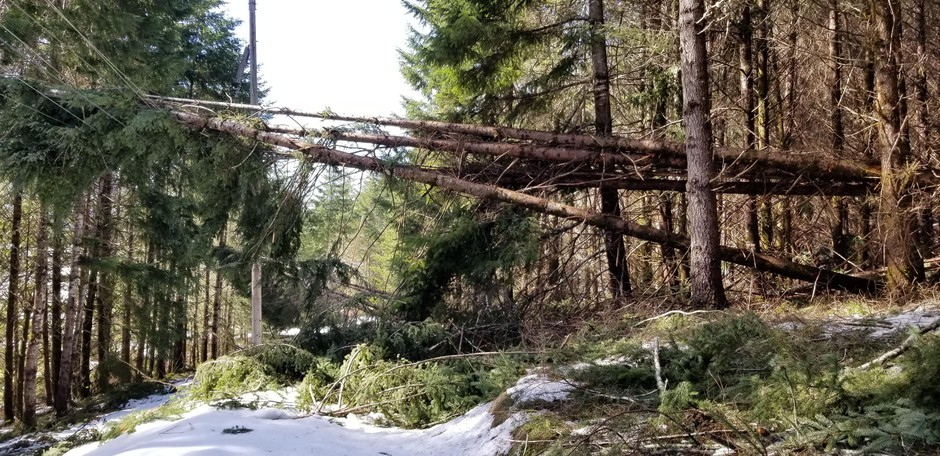 Several power lines are still down in Douglas County as of March 4, 2019.