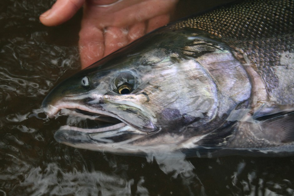 Oregon's Updated Streamside Logging Rules Get A Chilly