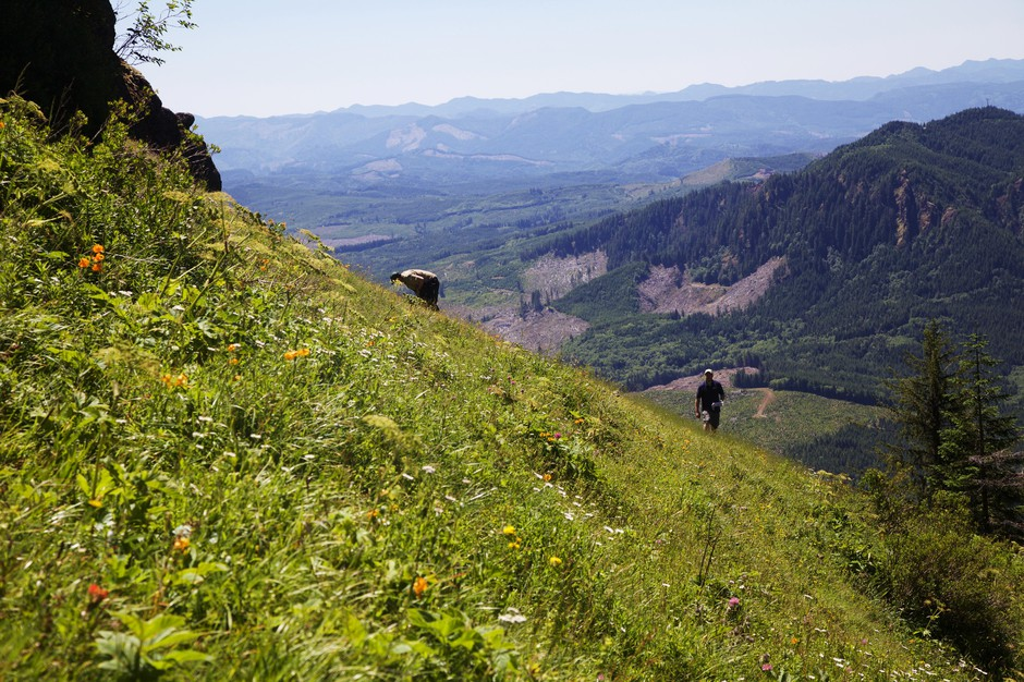 Biologists search for the early-blue violet in a steep meadow on Saddle Mountain.