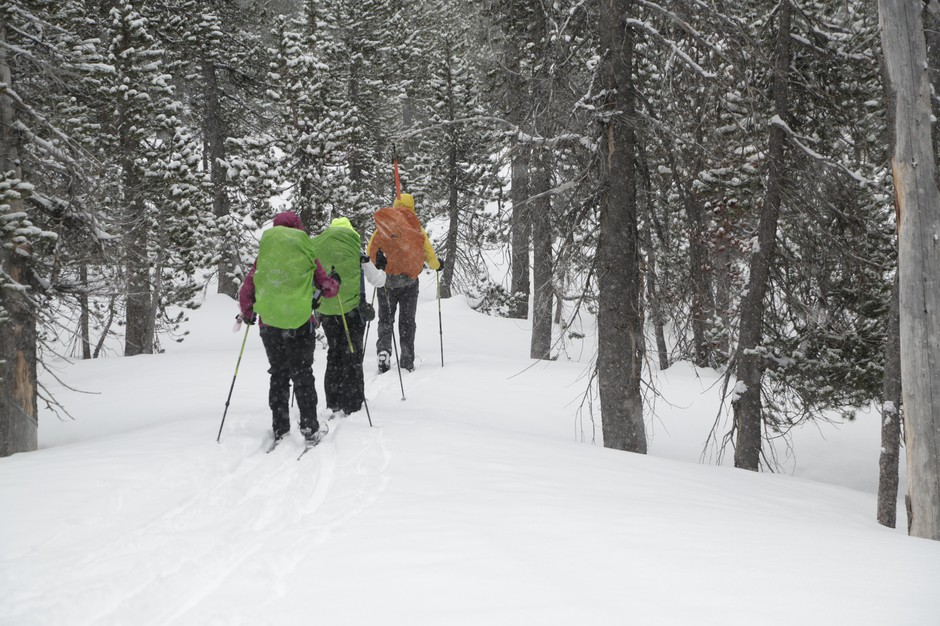 Skiing deep into the forest for a three-day hut-to-hut adventure.